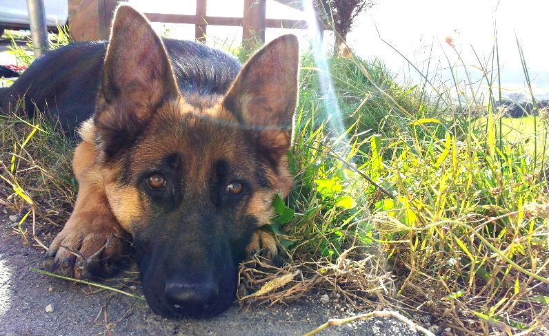 ¿Cuál es el nombre de perro más común en España? ¿y en Cantabria?